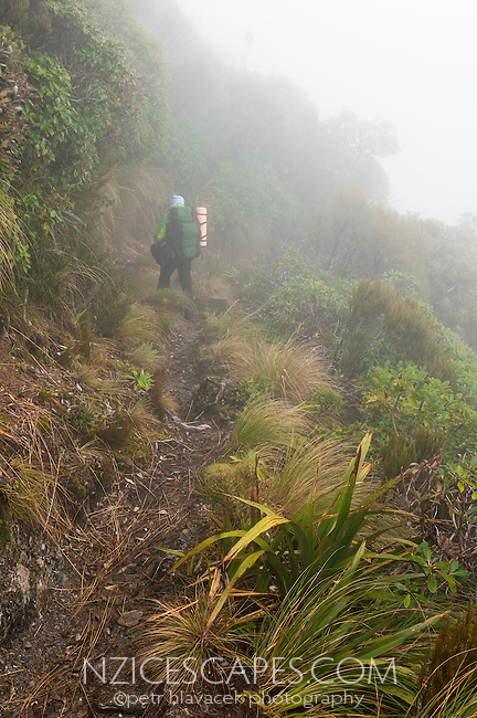 Tramper in fog on Alex Knob track, Westland NP, West Coast, New Zealand