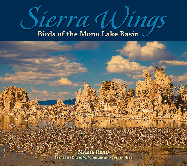 Sierra Wings: Birds of the Mono Lake Basin