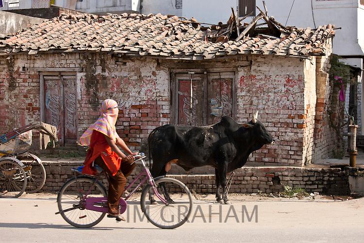 Muslim girl rides past untethered bull in the street in Nandi near Varanasi, Benares, Northern India