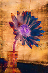 A large blue flower in a vase with texture