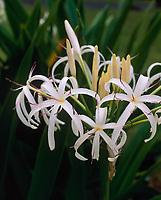 Hawaii Flowers Stock Photos