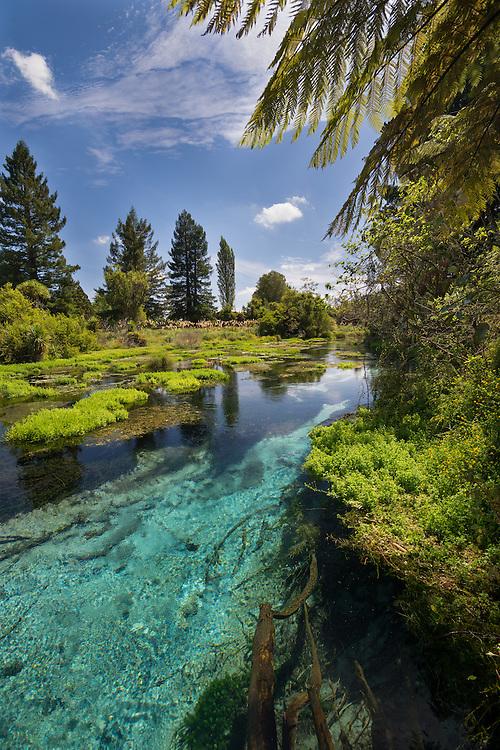 New Zealand Photos | Hamurana Springs, Rotorua, North Island, New Zealand - stock photo, canvas, fine art print