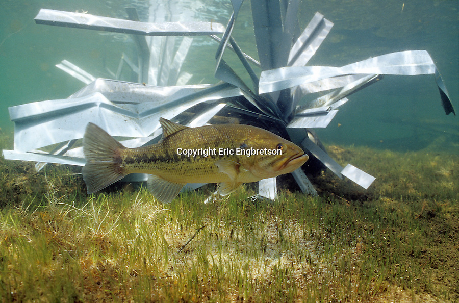 Fish hiding structure engbretson underwater photography for Artificial fish habitat