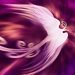 Magical phoenix bird on cosmic red purple background artistic design illustration