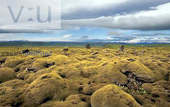 Moss-covered lava field, Skaftarhreppur, Iceland.