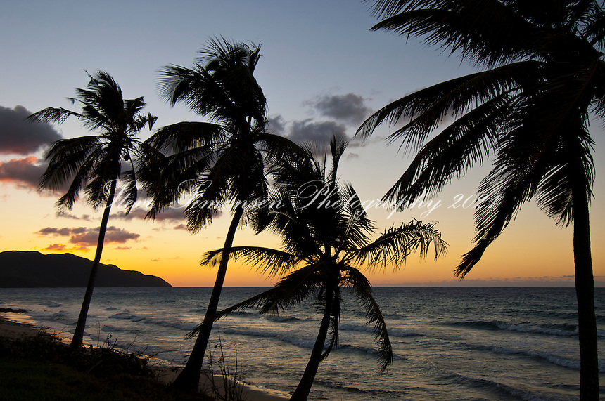 3 Palms at Sunset<br /> Cane Bay<br /> St Croix<br /> U.S. Virgin Islands