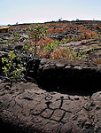 The Puu Loa Petroglyphs, located off the Chain of Craters Road in Hawaii Volcanoes National Park are etched into old lava beds on the Big Island of Hawaii. Puu Loa meant 'Long Hill', and the Hawaiians interpreted it to mean 'Long Life', so for countless generations, fathers came to Puu Loa and placed their newborn's umbilical cord in small holes scattered about the site, hoping for a long life for their children.