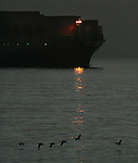 "The container ship ""Hyudai Confidence"" steams out of the San Francisco Bay California under a headlight at dawn while a flock of birds fly near her bow."