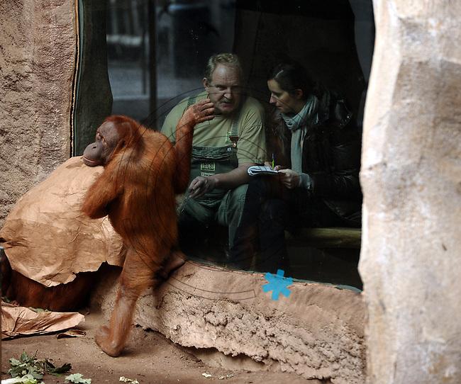 Pongoland Zoo Leipzig - MPI - im Bild: Oran-Utan - Pini+Batak unter Papier und Padana - hinter der Scheibe Pongoland-Chef Frank Schellhardt (54) mit BILD-Reporterin Luise Schlächter.  Foto: Norman Rembarz ..