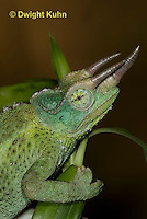CH35-541z  Male Jackson's Chameleon or Three-horned Chameleon, close-up of face, eyes and three horns, Chamaeleo jacksonii