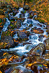 Water from the Chugach Mountains carries leaves with it, as it flows through Falls Creek along Turnagain Arm, a part of Cook Inlet in Alaska, near Anchorage. Photo was captured using High Dynamic Resolution (HDR).