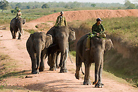 Way Jambas Elephant Park, Sumatra, Indonesia