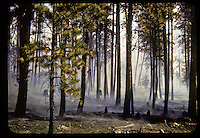 Forest Fire Photography