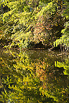 Washington DC; USA: Along the C&O Canal, or Chesapeake and Ohio Canal.  Fall foliage along the canal near Georgetown..Photo copyright Lee Foster Photo # 28-washdc75414