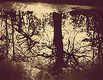 This image was created by using an alternative process called cyanotype.