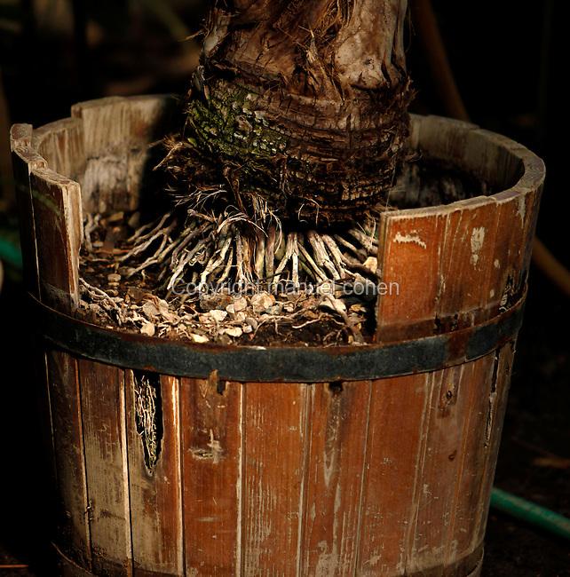 Tropical Rainforest Glasshouse (formerly Le Jardin d'Hiver or Winter Gardens), 1936, René Berger, Jardin des Plantes, Museum National d'Histoire Naturelle, Paris, France. Detail of a tree rooted in a wooden plant pot.