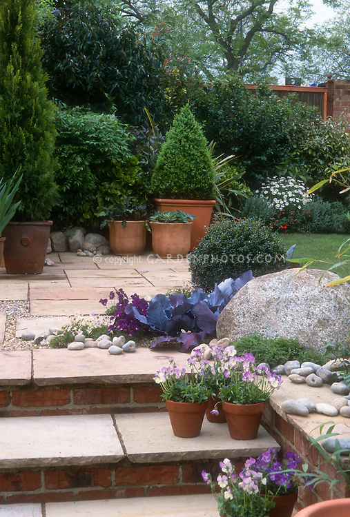 Tiered backyard patio with containers of pansies Violas, blue cabbage vegetable as groundcover ornamental, steps, stones, tree evergreen in planter, lawn grass, pretty landscaping