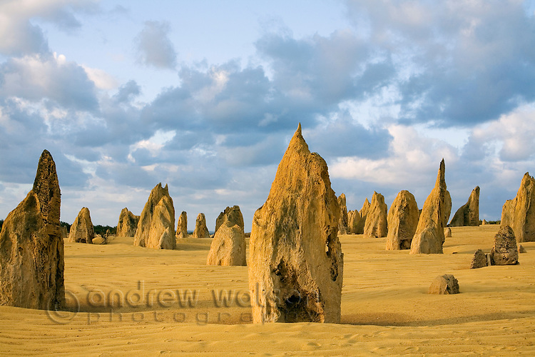Limestone pillars at dusk in the Pinnacles Desert.  Nambung National Park, Cervantes, Western Australia, AUSTRALIA.