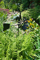 Adorable rooster windmill in fern garden with Ligularia, Japanese maple Acer palmatum, hosta, foliage plant garden that takes shade