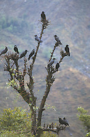 Birds in tree.