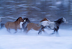 Horses, Methow Valley, Washington