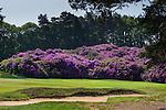 Swinley Forest Golf Day 2016