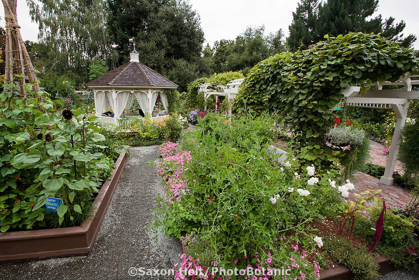 Gazebo in center of organic raised bed vegetable garden with gravel path and pergola,  edible landscape