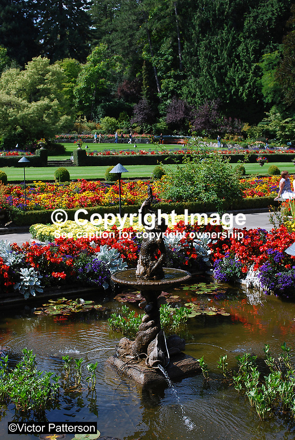 Butchart Gardens, National Historic Site of Canada,  Brentwood Bay, Vancouver Island, Canada, 200809091204, flowers, shrubs, trees, water feature, Italian Garden..Copyright Image from Victor Patterson, 54 Dorchester Park, Belfast, N Ireland, BT9 6RJ...Tel: +44 28 9066 1296.Mob: +44 7802 353836.Email: victorpatterson@mac.com..IMPORTANT: For copyright information go to www.victorpatterson.com and click on Terms and Conditions