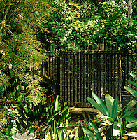 A concrete fence moulded to resemble bamboo shields a low concrete banquette from the lush undergrowth