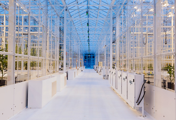 September 9, 2014. Research Triangle Park, North Carolina.<br /> The Syngenta Advanced Crop Lab is nearly one acre of advanced agricultural research under glass. The lab is capable of maintaining many different environments under its roof, allowing scientists to test the effects of various environmental elements on different crops and plants side by side.