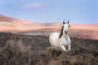 A wild horse galloping through sagebrush symbolizes the freed still found in the vast expanses of the West.