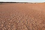 Dry cracked desert soil along the Oodnadatta Track.