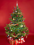 Decorated real Christmas tree isolated on red background