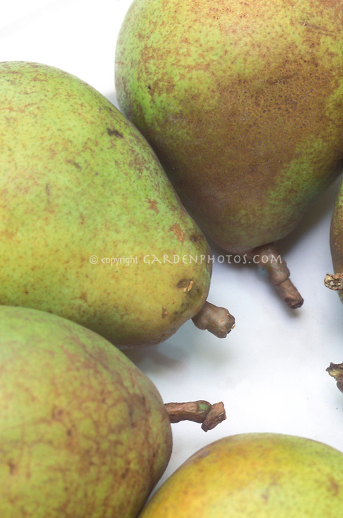 Pear Doyenne du Comice Pyrus communis fruits