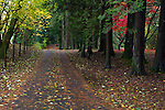 Fall leaves cover a road through Williams Park in Langley, British Columbia, Canada