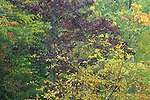 Fall colors, Eno River State Park, North Carolina
