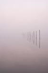 Wood Pilings In Fog