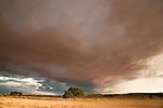 Nossob riverbed threatened by a storm, Kgalagadi Transfrontier Park, Northern Cape, South Africa