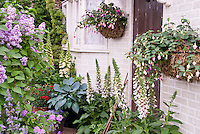 Syringa lilac in spring bloom in mixed garden at front entry of house with fuchsia in pot containers, Digitalis Pam's Split foxglove, blue Hosta Halcyon, red Dianthus for beautiful entry landscaping plants