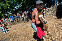 A rancher grabs a wild horse foal with his bare hands during the Rapa das Bestas (Shearing of the Beasts) festival in Torroña, Spain, 5 June 2011. The herds of of wild horses roam freely the hills of Galicia in the north-western Spain. Each year, in the beginning of summer, villagers herd horses down from the higher ground, rounding them up in the curro, a centuries-old stone arena. Here, ranchers catch the animals one by one and shear their manes and tails. Some of the young men, showing up their strength and courage, fight the untamed horses just with their bare hands. At the end of Rapa das Bestas, a 400-year-old Spanish tradition, the newborn foals are branded and all horses are released back into the wilderness.