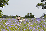 Dog fun on the Isle of Wight.