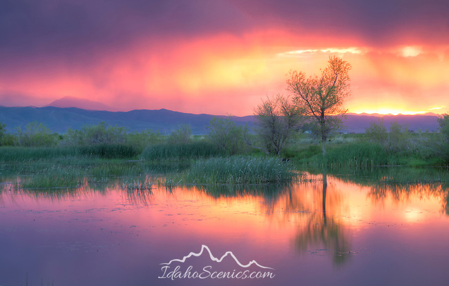 Idaho, South central, Camas County, Fairfield. A pre-dawn thunderstorm fills the sky with intense color and reflects in a pond.