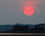 Birds fly to roost during a sunset over the community of Oyster Bay in coastal Wakulla County south of Tallahassee July 8, 2006.  (Mark Wallheiser/TallahasseeStock.com)