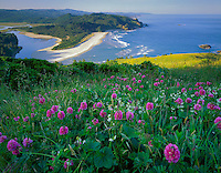 Tillamook County, OR  <br /> Hairy checker mallow (Sidalcea hirtipes) and manroot (Marah oreganus) on a prairie of Cascade Head above the mouth of the Salmon River