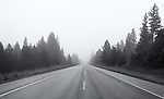 Heavy fog obscures the road and trees off in the distance on a lonely road.