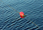 Bright red buoy floats on the bright blue water, restricted by a worn line, dividing the swimmers from the non-swimmers, summer form other seasons, in Lake Washington