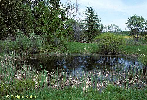 PO01-015z  Small pond