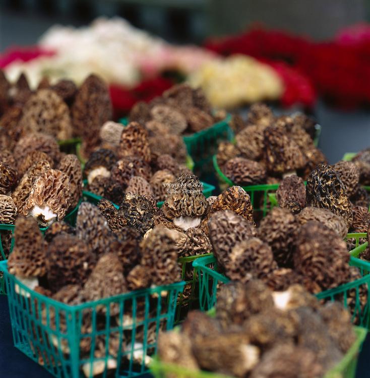 Wild Morel Mushrooms at the Portland Farmers' Market in Portland, Oregon