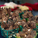 Wild Morel Mushrooms at the Portland Farmers' Market in Portland, Oregon