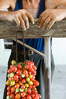 Detail of the rough hands of Italian tomato farmer Ponsiello Giovanni